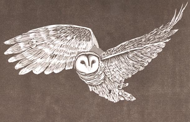 OwlSmall copy